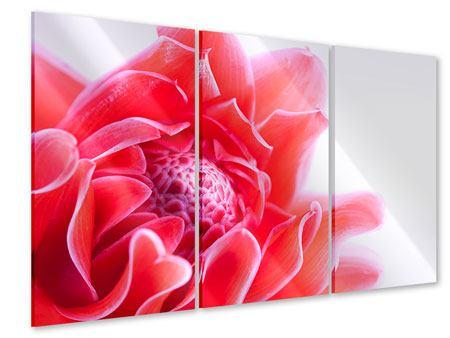 Acrylglasbild 3-teilig Etlingera XXL