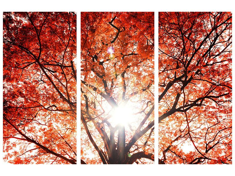 Acrylglasbild 3-teilig Herbstlicht