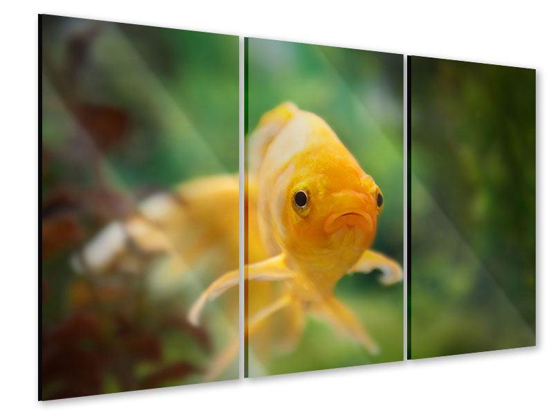 Acrylglasbild 3-teilig Der Fisch