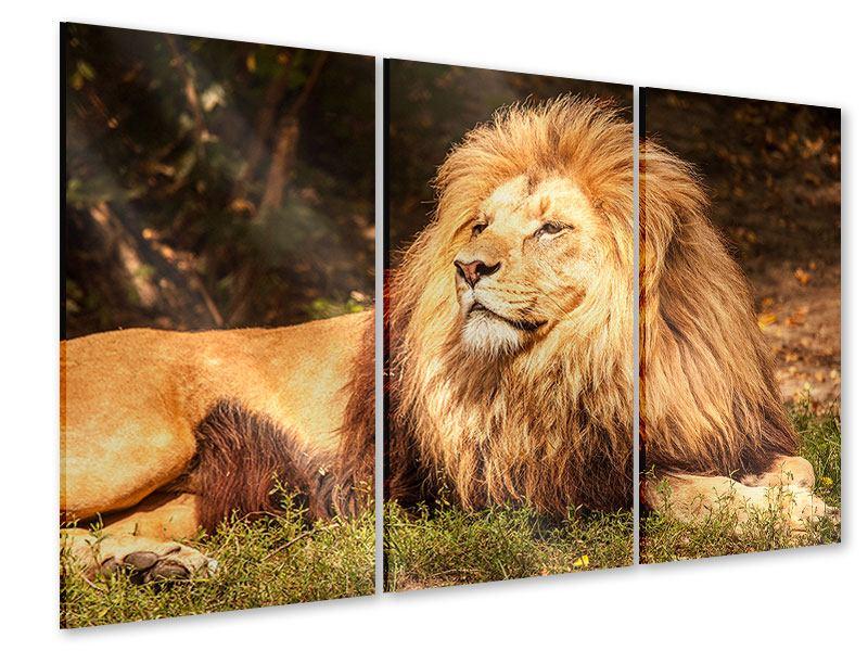 Acrylglasbild 3-teilig Löwe