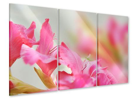 Acrylglasbild 3-teilig Gladiolen