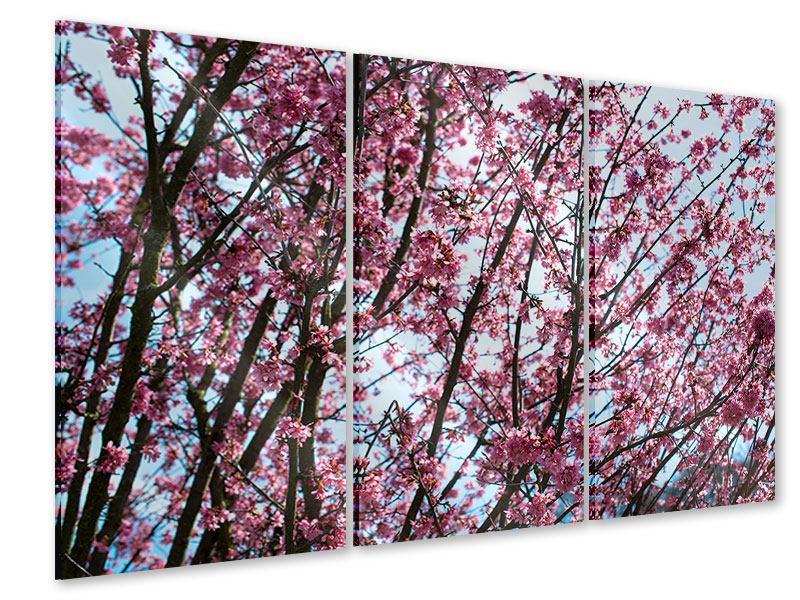 Acrylglasbild 3-teilig Japanische Blütenkirsche