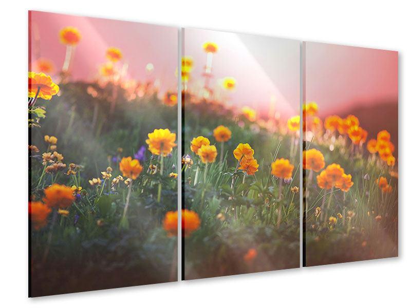 Acrylglasbild 3-teilig Die Bergwiese