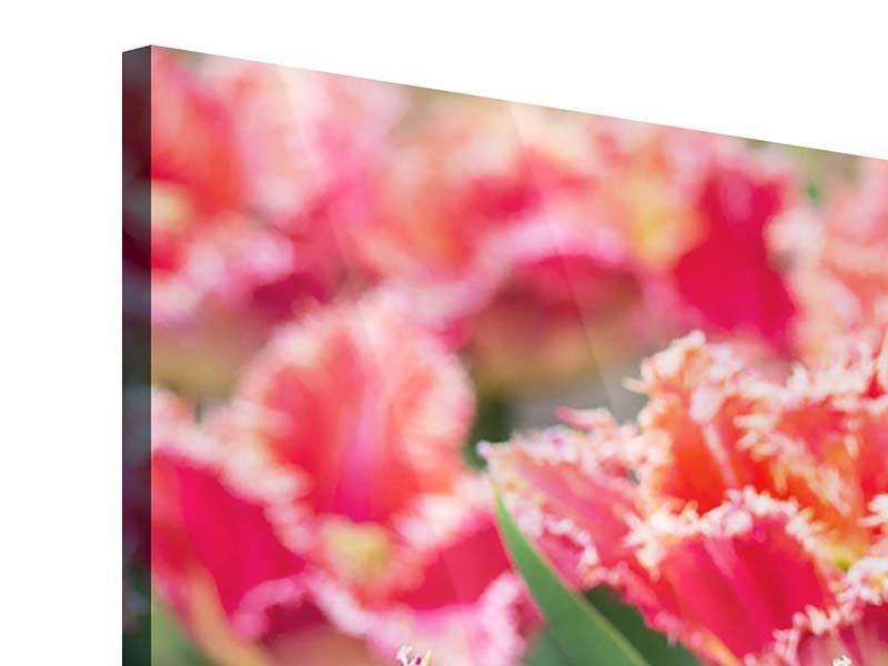 Acrylglasbild 3-teilig Die Tulpenwiese