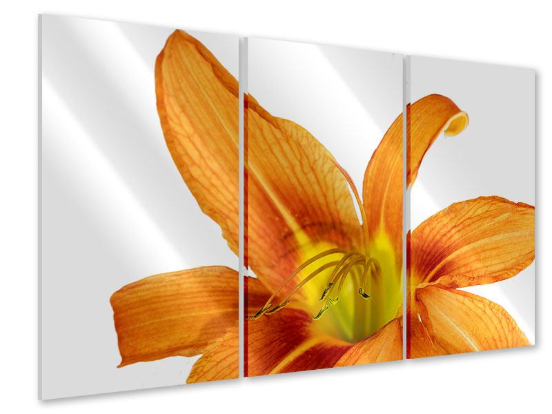 Acrylglasbild 3-teilig Die Tiger-Lilie