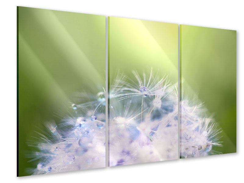Acrylglasbild 3-teilig Pusteblume XL im Morgentau