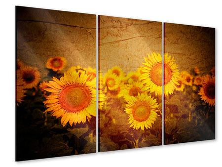 Acrylglasbild 3-teilig Retro-Sonnenblumen
