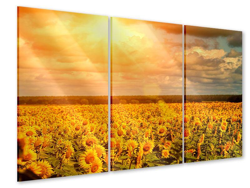 Acrylglasbild 3-teilig Goldenes Licht für Sonnenblumen