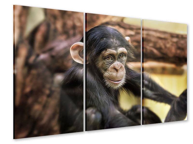 Acrylglasbild 3-teilig Der Schimpanse