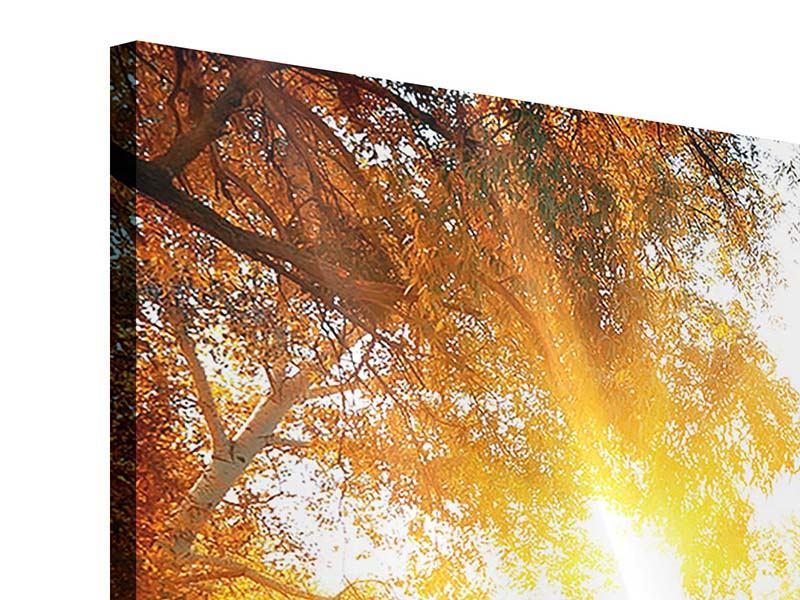 Acrylglasbild 3-teilig Waldspiegelung im Wasser