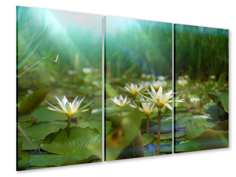 Acrylglasbild 3-teilig Im Seerosenteich