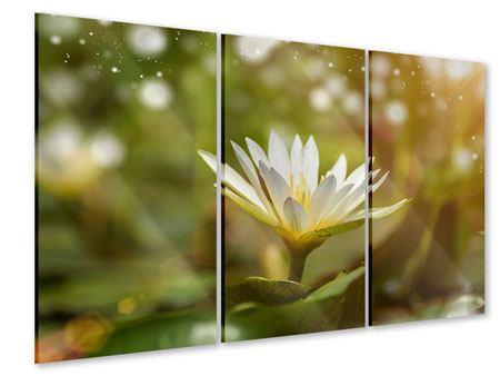 Acrylglasbild 3-teilig Lilien-Lichtspiel