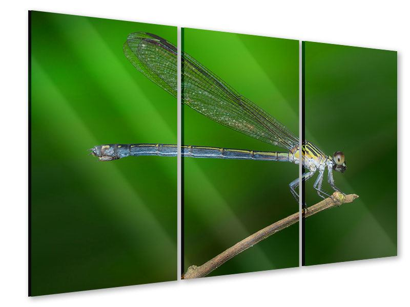 Acrylglasbild 3-teilig Die Libelle