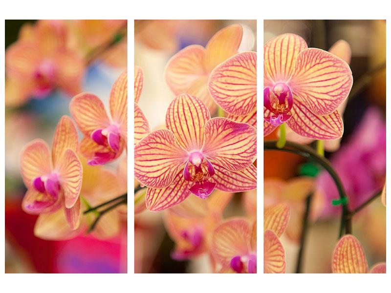 Acrylglasbild 3-teilig Exotische Orchideen