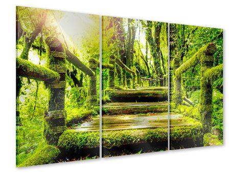 Acrylglasbild 3-teilig Moos