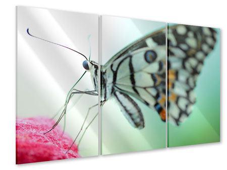 Acrylglasbild 3-teilig Schmetterling XXL