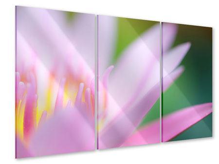 Acrylglasbild 3-teilig XXL-Lilie