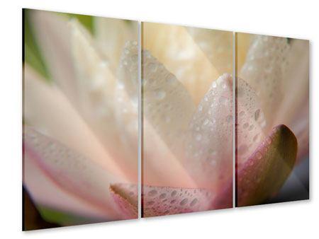 Acrylglasbild 3-teilig Close Up Seerose