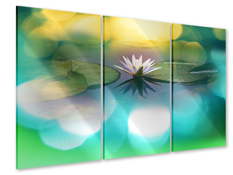 Acrylglasbild 3-teilig Lotus-Spiegelung