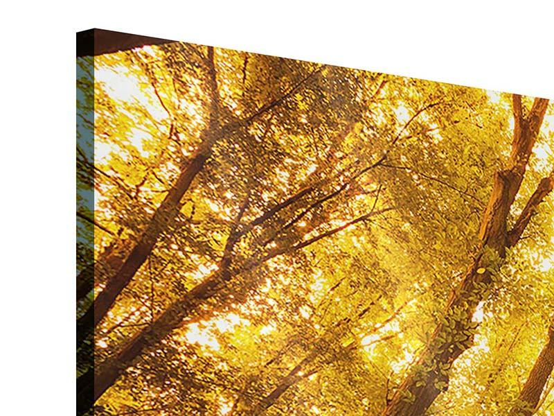 Acrylglasbild 3-teilig Herbstwald