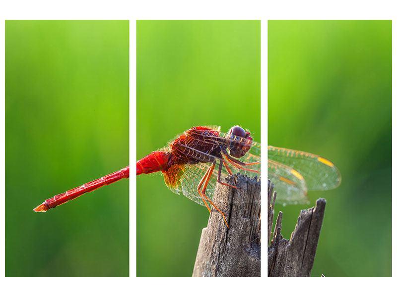 Acrylglasbild 3-teilig Libelle XXL