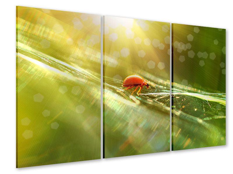 Acrylglasbild 3-teilig Marienkäfer im Sonnenlicht