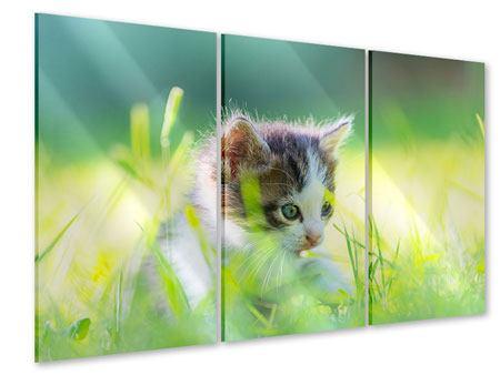 Acrylglasbild 3-teilig Kitten