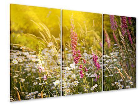 Acrylglasbild 3-teilig Sommerliche Blumenwiese