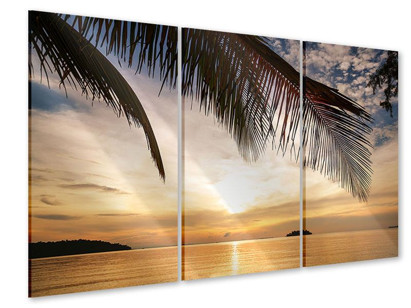 Acrylglasbild 3-teilig Strandpalme