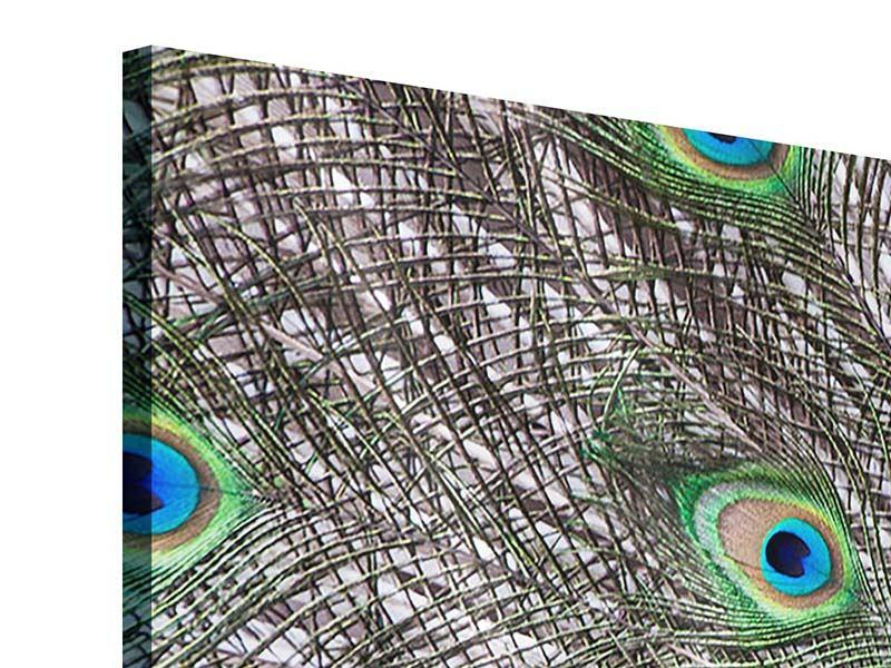 Acrylglasbild 3-teilig Blauer Pfau