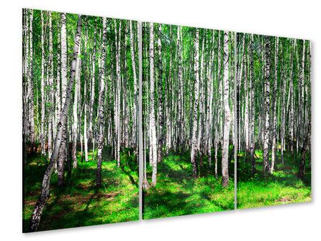 Acrylglasbild 3-teilig Sommerlicher Birkenwald