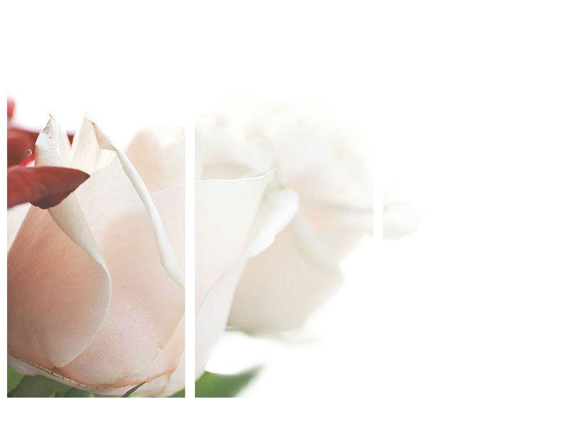 Acrylglasbild 3-teilig Herrliche Rosen