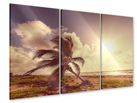 Acrylglasbild 3-teilig Die schiefe Palme