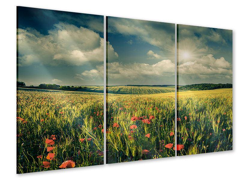 Acrylglasbild 3-teilig Der Mohn im Weizenfeld
