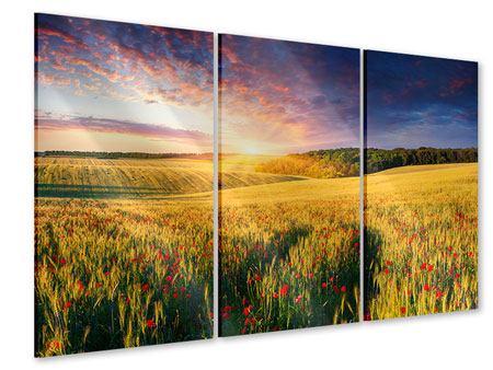 Acrylglasbild 3-teilig Ein Blumenfeld bei Sonnenaufgang