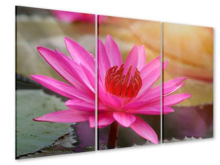Acrylglasbild 3-teilig Sonnige Seerose