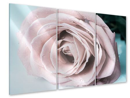 Acrylglasbild 3-teilig Pastellrose