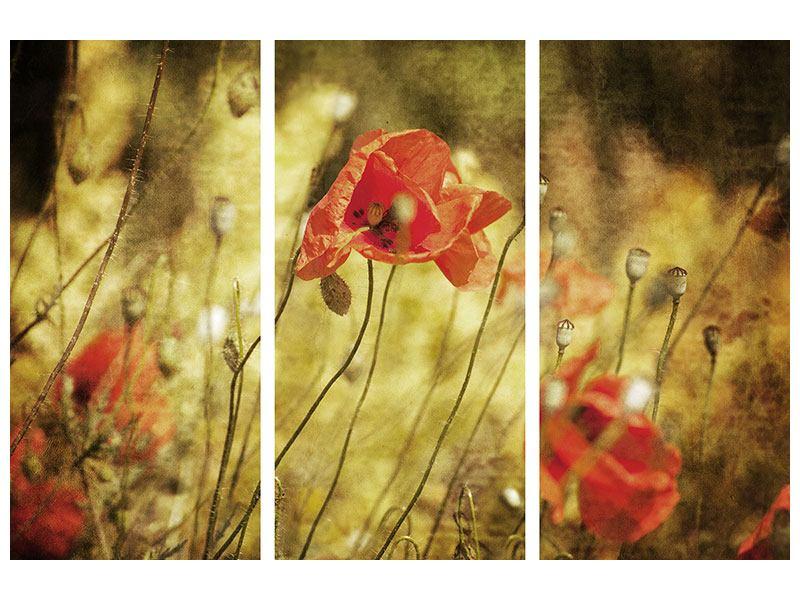 Acrylglasbild 3-teilig Der wilde Mohn
