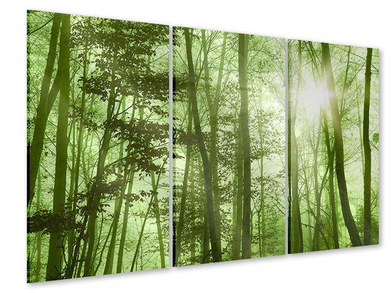 Acrylglasbild 3-teilig Nibelungenwald