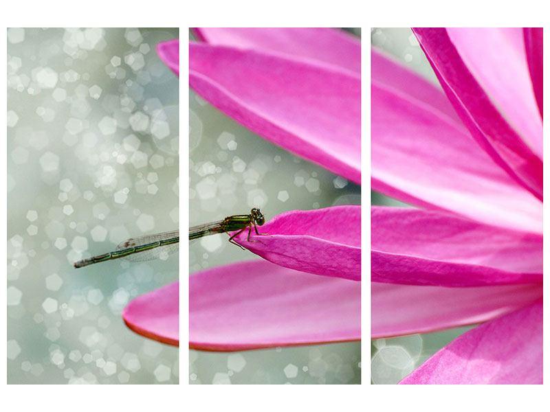 Acrylglasbild 3-teilig Libelle auf dem Seerosenblatt