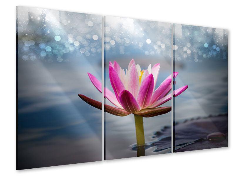 Acrylglasbild 3-teilig Lotus im Morgentau