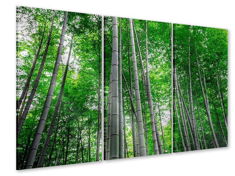 Acrylglasbild 3-teilig Bambuswald
