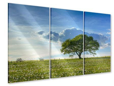 Acrylglasbild 3-teilig Frühlingsbaum