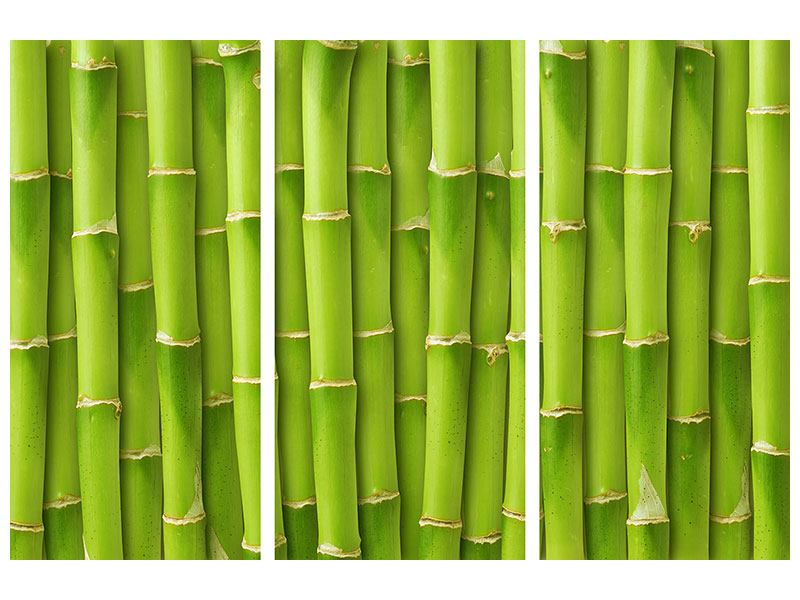 Acrylglasbild 3-teilig Bambuswand