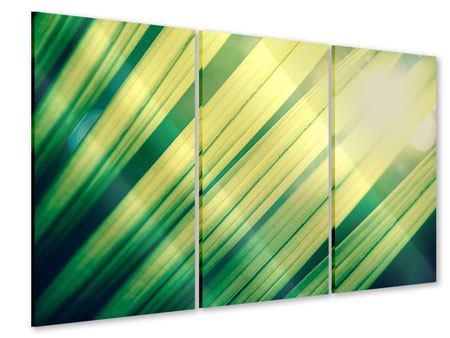 Acrylglasbild 3-teilig Beleuchtetes Palmblatt