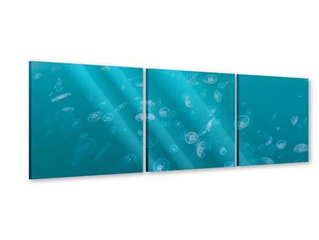 Panorama Acrylglasbild 3-teilig Viele Quallen