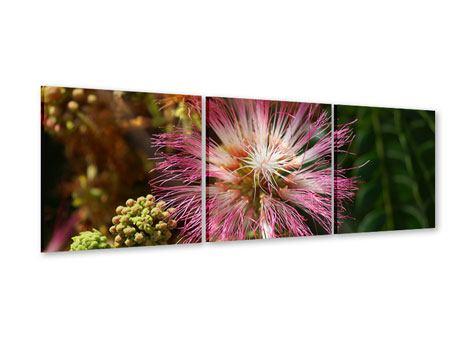 Panorama Acrylglasbild 3-teilig Die Regenbaumblüte