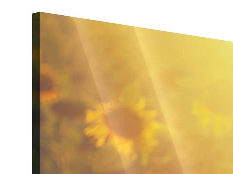 Panorama Acrylglasbild 3-teilig Sonnenblumen im goldenen Licht