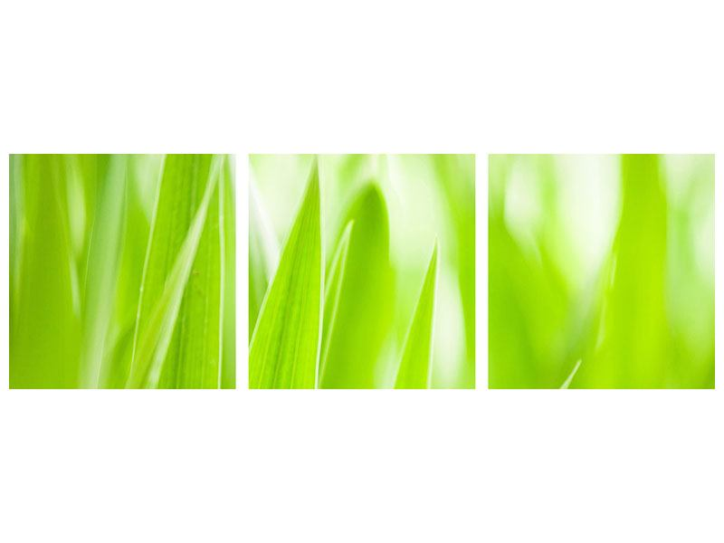 Panorama Acrylglasbild 3-teilig Gras XXL