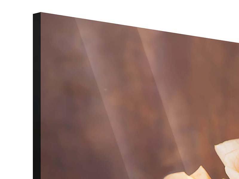 Panorama Acrylglasbild 3-teilig Die Rosenzeit